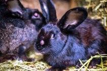 Профилактические меры против болезней кроликов