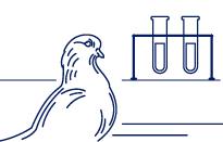 Уникальная разработка - вакцина для голубей «Виросальм»
